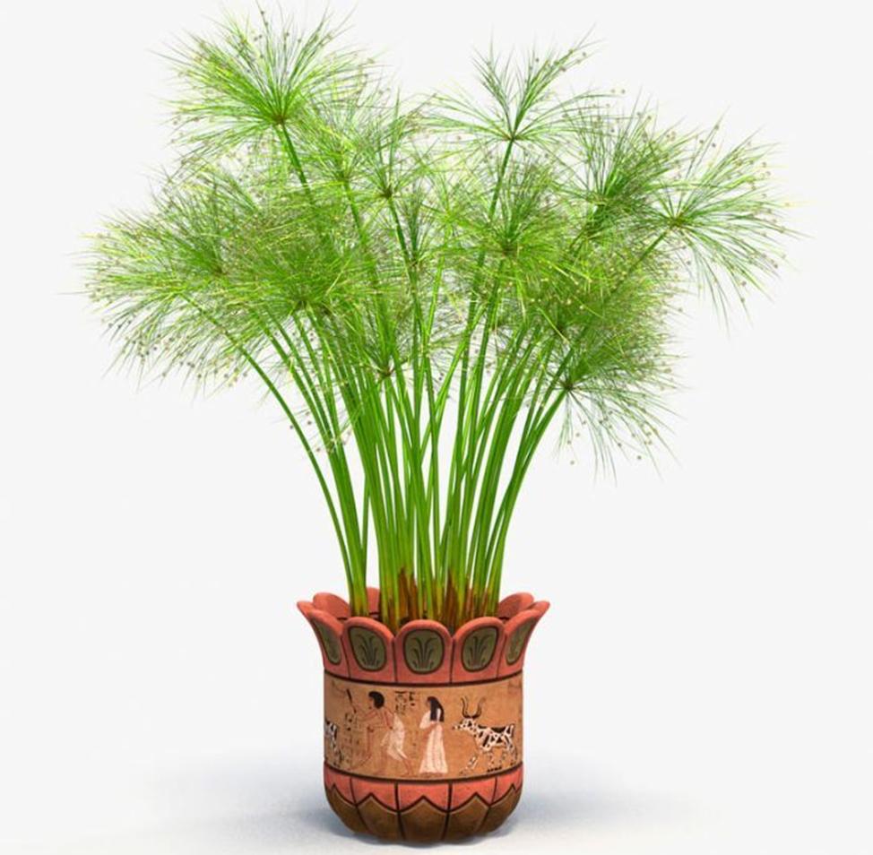 период покоя в жизни растений