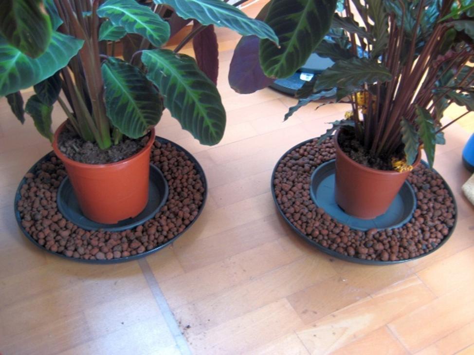 содержать растение в период покоя