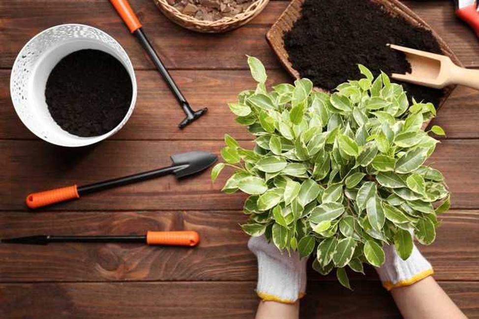 Защита растений от вредителей в период покоя