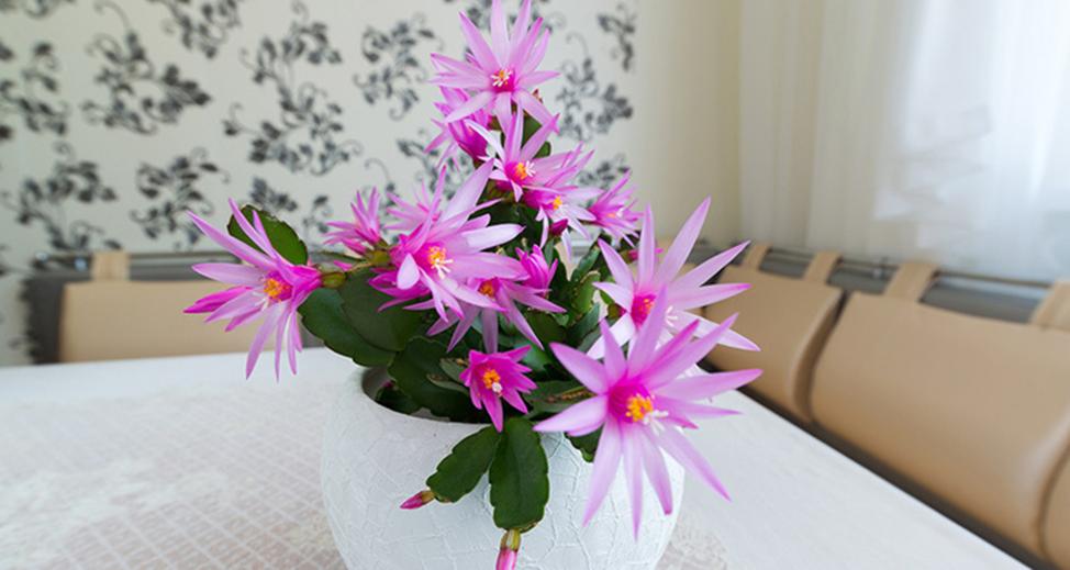 грунт для рассады цветов