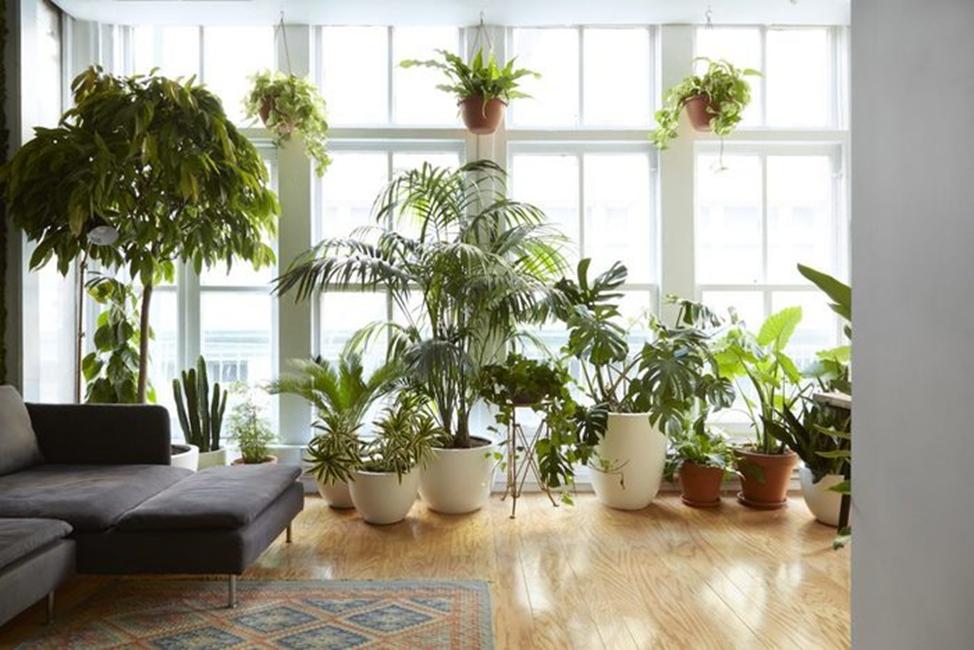 растений, чтобы очистить воздух в комнате
