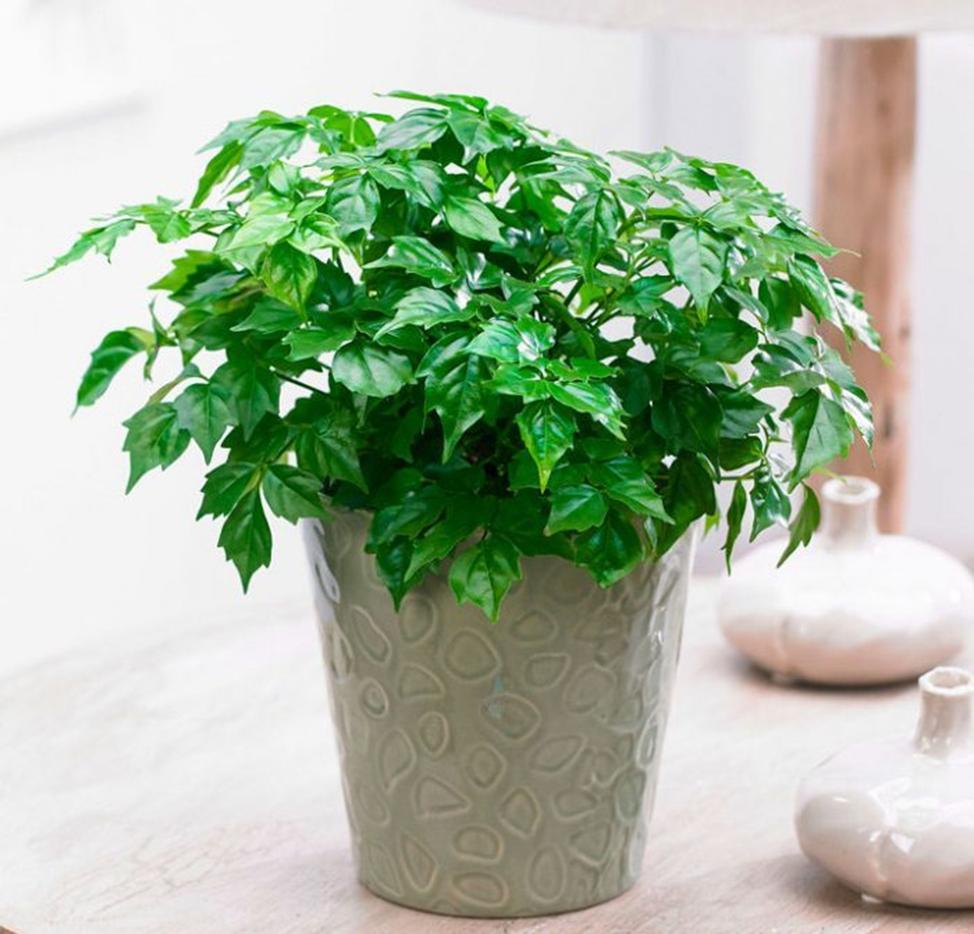 Как комнатные растения реагируют на табачный дым