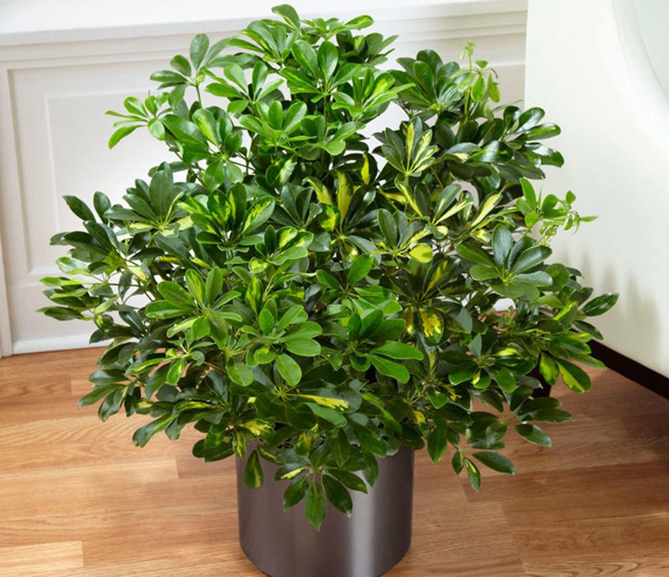 Какие примеси в воздухе наиболее вредны для растений