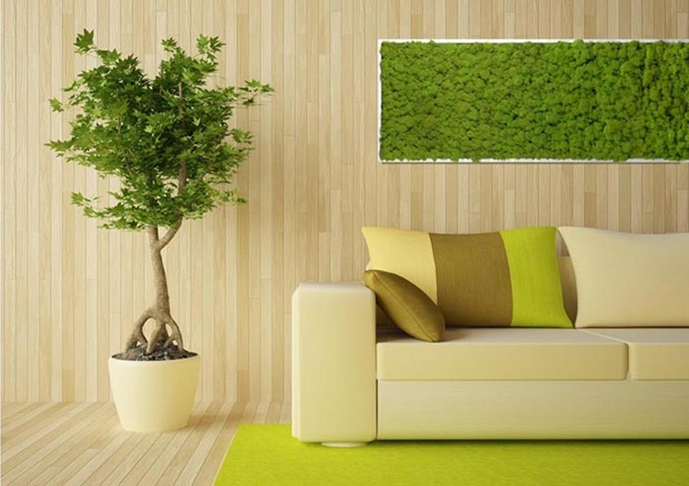 Какие растения способны увлажнить воздух