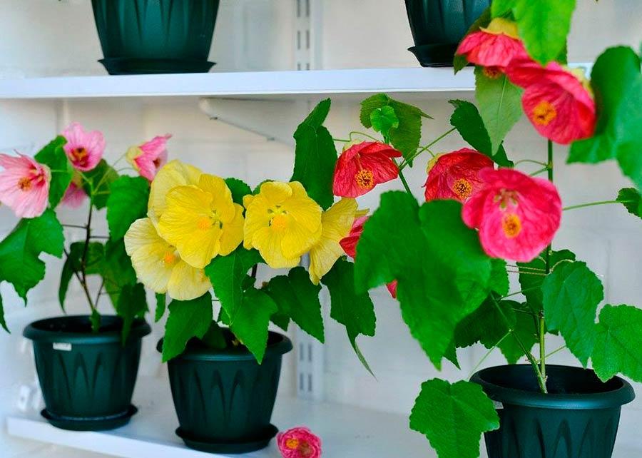 светолюбивые комнатные растения названия