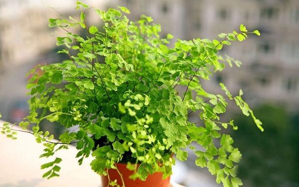 листья светолюбивых растений