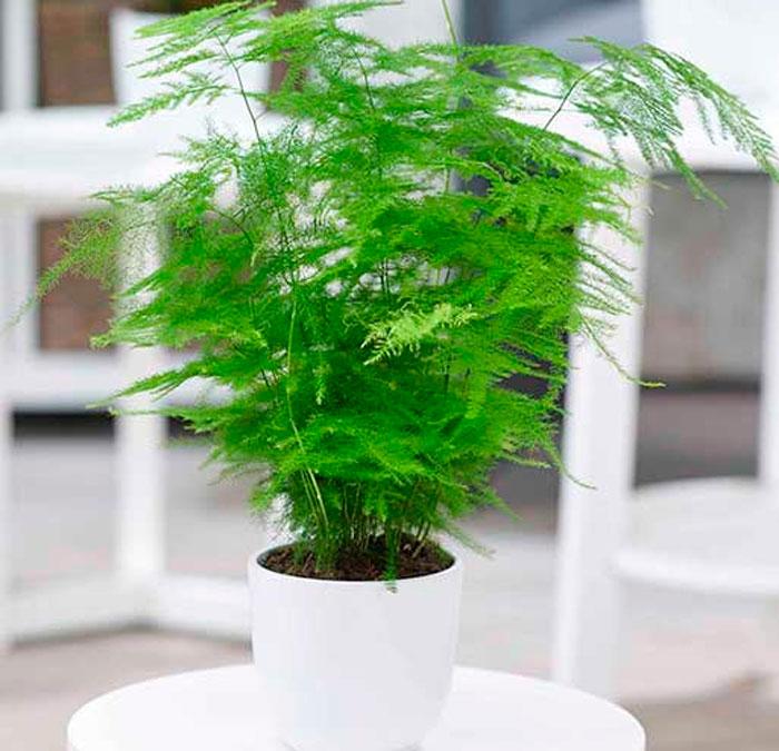 светолюбивые растения имеют