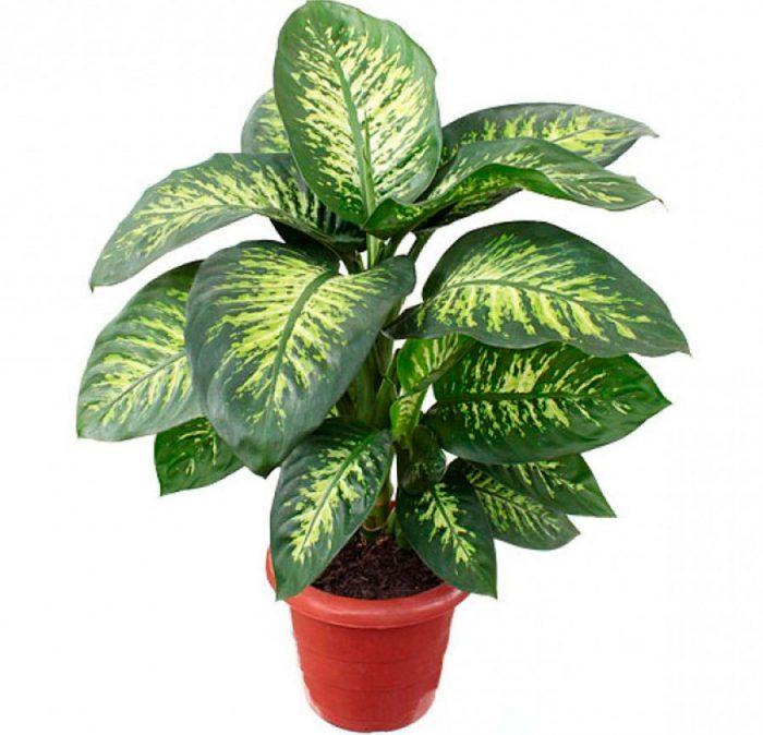 признаки светолюбивых растений