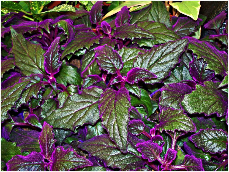 светолюбивые однолетние растения