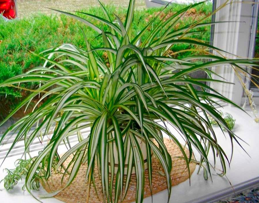 светолюбивые растения цветы