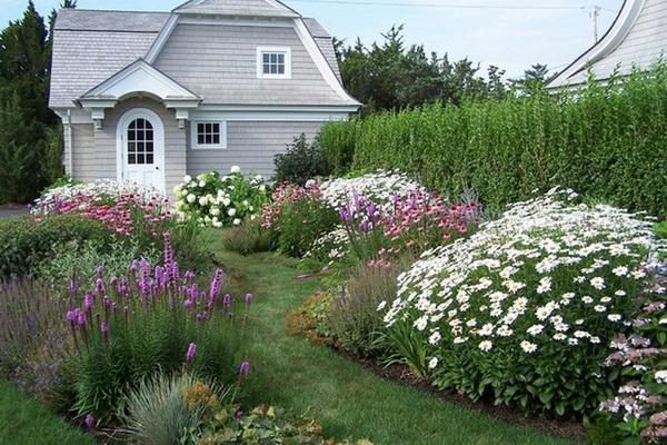 ромашка садовая