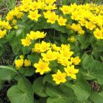 Лучшие влаголюбивые растения для дома и сада