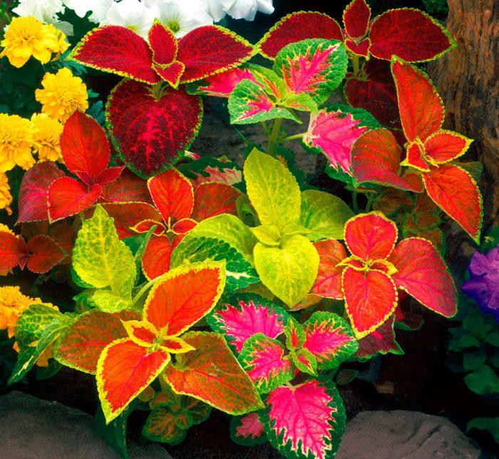 укажите светолюбивые растения