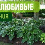 Светолюбивые растения: особенности и характеристики, фото декоративных и цветущих культур