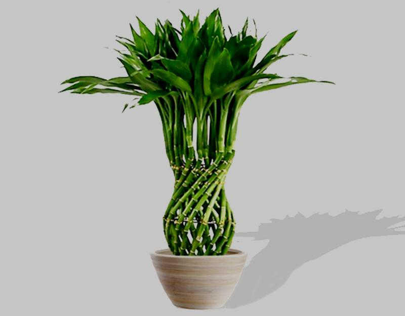 светолюбивые травянистые растения
