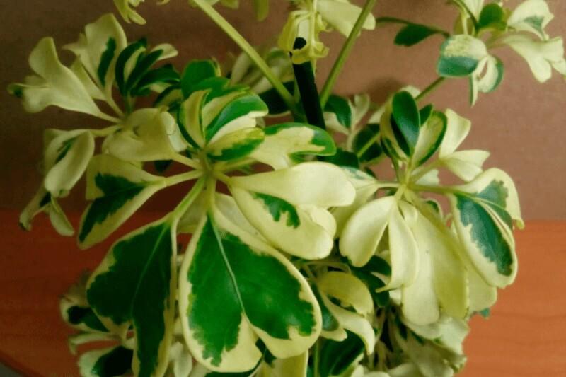 строение светолюбивых растений