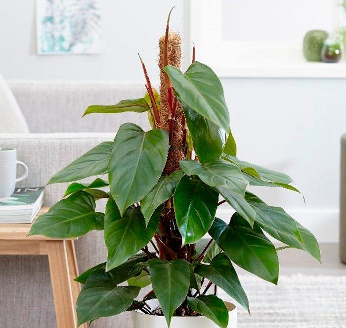 светолюбивые растения названия