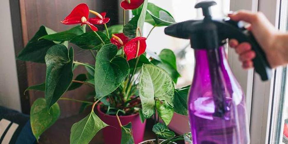 уход за влаголюбивыми растениями